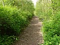 Path in Limekiln Plantation - geograph.org.uk - 1298660.jpg