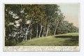 Peak's Island, The Birches, Portland, Me (NYPL b12647398-68647).tiff