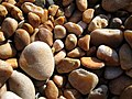 Pebbles Seatown Beach - geograph.org.uk - 1227086.jpg