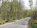 Perry Wood - geograph.org.uk - 413301.jpg