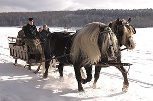 horse pulled sled