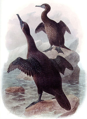 The Greatest Show on Earth: The Evidence for Evolution - Image: Phalarocorax harrisi DI09P10CA