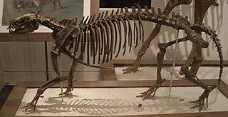 <i>Phenacodus</i> Genus of mammals (fossil)