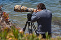 Photographer with 600mm Lens. Morro Bay Scene 2011-06-29.jpg
