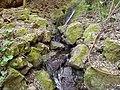 Piedras con musgo - panoramio.jpg