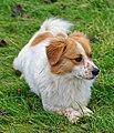 Pies nierasowy, 20201225 1128 5278.jpg