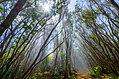 Pihea Trail Hike (32041007544).jpg