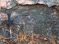 Pillow lava in-situ.JPG