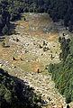 Pirina-poljana.jpg