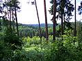 Pirmannswald bei Lautzkirchen 03 2010-06-18.JPG