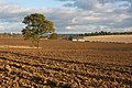 Ploughed fields at Westley - geograph.org.uk - 1573972.jpg
