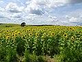 Pope Farm Conservancy - panoramio - Corey Coyle (9).jpg