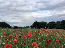 Poppy fields near Wheatmoor Farm, within the ward of Roughley, Sutton Coldfield