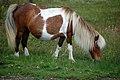 Pregnant Pony.jpg