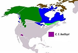 Present distribution of the gray wolf subspecies - Mexican wolf (Canis lupus baileyi).jpg