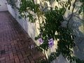 Purple Flowers On the Wall.jpg