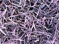Purple heart (3151952531).jpg