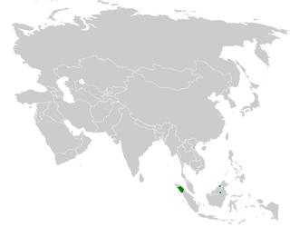 Blue-wattled bulbul species of bird