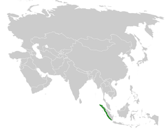 Pycnonotus tympanistrigus distribution map.png