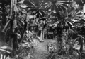 Queensland State Archives 1241 The Maze Kuranda NQ c 1935.png