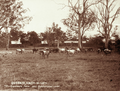 Queensland State Archives 5126 Gracemere Farm near Rockhampton c 1897.png