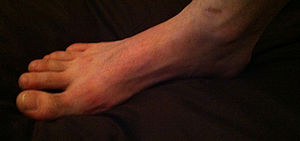 English: Foot. Mainly used for walking and kic...