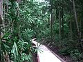 Rainforest gully in the George Brown Darwin Botanic Gardens.jpg