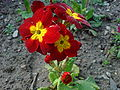 Redflowerstafford.JPG