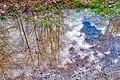 Reflection Of Trees (241090705).jpeg