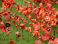 Remembrance poppies in the Imperial War Museum London.jpg