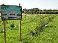 René (Sarthe) Bois des bébés et bois des enfants.jpg