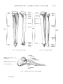 Richer - Anatomie artistique, 2 p. 35.png