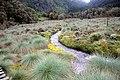 River Bujuku in lower bigo.jpg