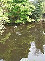 River Don Reflections, Oughtibridge - geograph.org.uk - 860959.jpg
