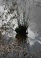 River Tone, Taunton. - geograph.org.uk - 1196433.jpg