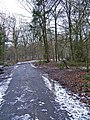Road in Wyre Forest, off B4194 - geograph.org.uk - 1032728.jpg