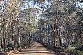 Road through the trees, Dryandra Woodland, Western Australia.jpg
