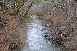 Rogue river (south yamhill river).jpg