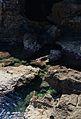 Roques davant de la cova Tallada de Xàbia.JPG