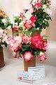 Rosas Sant Feliu.jpg