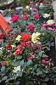 Roses - irresistibly fragrant.jpg