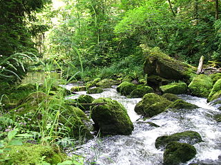 Rottach (Iller, Rettenberg) River in Germany