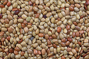 Picture of horse gram seeds (Indian name: Kulthi)