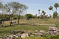 Safari in Busch Gardens Tampa Bay - panoramio.jpg