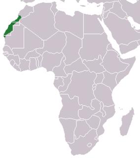 Saharan shrew Species of mammal