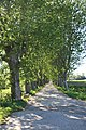 Saint-Thibéry chemin Pont Vieux.jpg