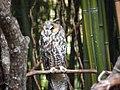 Saint Louis Zoo 039.jpg