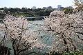 Sakura in Chidorigafuchi 20190406-5.jpg