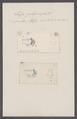 Salpa polymorpha - - Print - Iconographia Zoologica - Special Collections University of Amsterdam - UBAINV0274 092 08 0057.tif