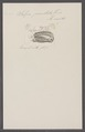 Salpa punctata - - Print - Iconographia Zoologica - Special Collections University of Amsterdam - UBAINV0274 092 08 0011.tif